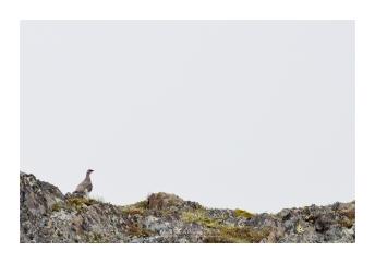 """Mâle en parure d'été. Croisé de """"loin"""" (Focale : 200mm, ISO : 160, Pose : 1/1600s, Ouverture : f/5)"""