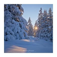 On s'imagine presque dans les forêts de Sibérie (Focale : 45mm, ISO : 250, Pose : 1/1000s, Ouverture : f/10)