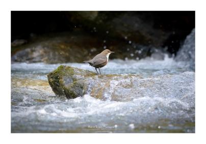En quête de proies, les pieds dans l'eau (Focale : 852mm, ISO : 4000, Pose : 1/400s, Ouverture : f/6.3)